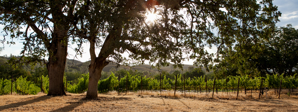 Michaels vineyard, Six Sigma Ranch