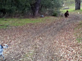 Bear and dog at Six Sigma Ranch